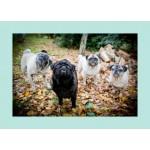 Card - Blank (Autumn Leaves Pug Group)