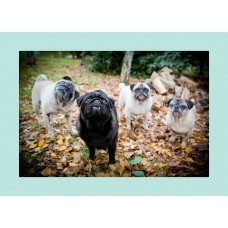 Card - Blank (Autumn Leaves Pug Group)