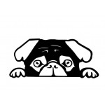 Sticker Peeking Pug Black